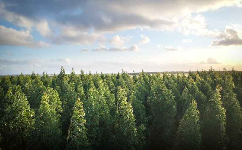 The Importance of Reforestation